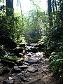 Hiking trail to waterfall - Great Smoky Mountain State Park.jpg