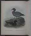 History of the birds of NZ 1st ed p258-2.jpg