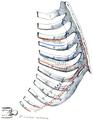 Holden's human osteology (1899) - Plt41.png