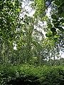 Holme Fen, Cambridgeshire (48092342602).jpg