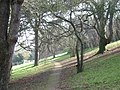 Homeyards Botanic Garden, trees - geograph.org.uk - 1195648.jpg