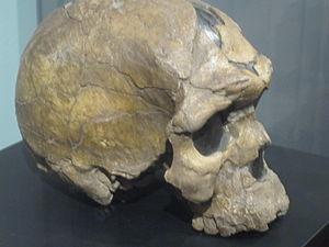 Ethiopia - A Homo sapiens idaltu hominid skull