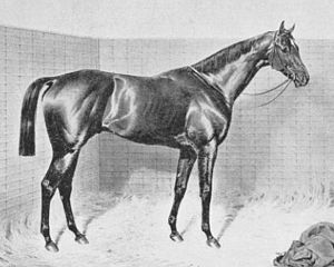 Orme (horse) - Painting of Orme by Emil Adam