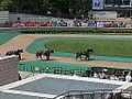 Horse racing @ Tokyo Race Course @ Fuchu (14140988833).jpg