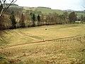 Horses in field - geograph.org.uk - 360557.jpg