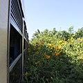 Hsipaw to Pyin U Lwin by train 04 (cropped).JPG