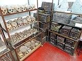 Skulls of victims of genocide in Bangladesh