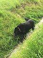 Hund in oberrads grüne Soße feldern wasseranlage.jpg