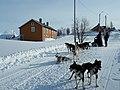 Hundekjøring på Jakobsbakken.jpg