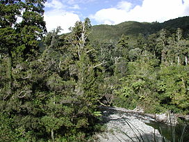 Hutt River from flume bridge, Kaitoke.jpg