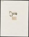 Hyla rubra - 1700-1880 - Print - Iconographia Zoologica - Special Collections University of Amsterdam - UBA01 IZ11500133.tif