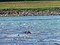 I Get Nessie - panoramio.jpg