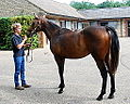 Iffraaj - Elutrah yearling colt (9419701668).jpg