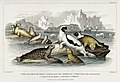 Illustration from A History of the Earth and Animated Nature by Oliver Goldsmith from rawpixel's own original edition of the publication 00022.jpg