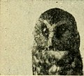 "Image from page 244 of ""Baby bird-finder ... by Harriet E. Richards and Emma G. Cummings .."" (1904).jpg"