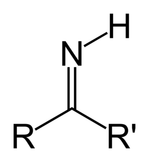 Imino acid - Imino group attached to carbon