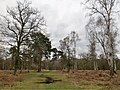 In the middle of Holme Fen - April 2016 - panoramio.jpg