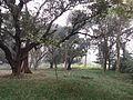Indian Botanic Garden - Howrah 2012-01-29 1642.JPG