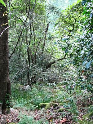 Cecilia Forest - Indigenous Afro-temperate forest still survives in sheltered kloofs higher on the mountain slopes