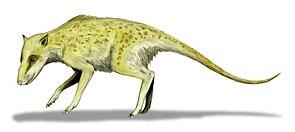 Zeichnerische Darstellung von Indohyus
