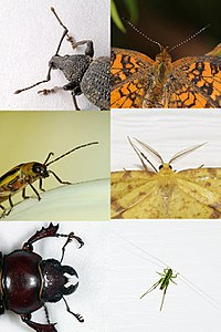 Evolution has produced astonishing variety in insects. Pictured are some of the possible shapes of antennae.