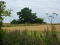 Into open fields - geograph.org.uk - 1429308.jpg