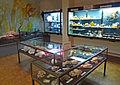 Invertébrés marins-Musée d'histoire naturelle et d'ethnographie de Colmar.jpg