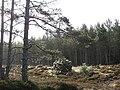 Inveruglas Forest - geograph.org.uk - 721966.jpg