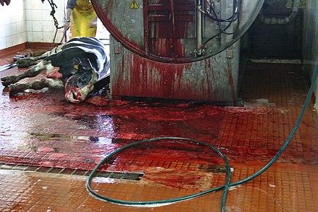 slaughterhouses ile ilgili görsel sonucu