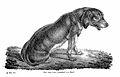 J. N. P. Rust, Aufsatze und Abhandlungen, 1836 Wellcome L0020346.jpg