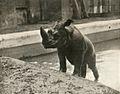 Jackson rhino.jpg
