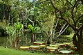 Jardim Botânico 2.JPG