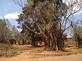 Jardin de los olivos, Tzintzuntzan, Mich. - panoramio.jpg