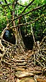 Jingmaham Living Root Bridge.jpg