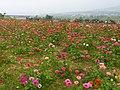 Jiuhu Flower Fields 九湖花海 - panoramio.jpg
