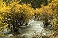 Jiuzhaigou National Park (196007771).jpeg