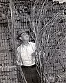 Joe Burton Kentucky hemp farmer with hemp.jpg