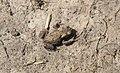 Jonge pad op de grond.jpg