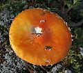 Jyväskylä - mushroom 20.jpg