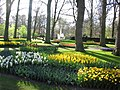 KEUKENHOF HOLLAND 2006 - panoramio.jpg