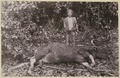 KITLV - 25725 - Demmeni, J. - Dayak hunter with the wild bull killed during a hunt, Upper Mahakam - 1897.tif