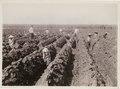 KITLV - 30198 - Kurkdjian, N.V. Photografisch Atelier - Soerabaja - Sugar plantation in East Java - 1921.tif