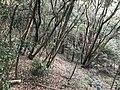Kasuya Research Forest of Kyushu University 1.jpg