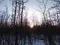 Kerry Wood Nature Conservatory (32856099381).jpg