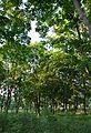 Kirovograd Park Peremogy 02 (YDS 4831).JPG