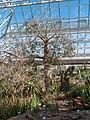Kirstenbosch National Botanical Garden, Cape Town (P1060019).jpg
