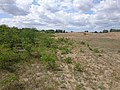 Korina 2015-07-30 Robinia pseudoacacia 3.jpg