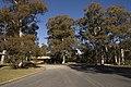 Kosciuszko National Park NSW 2627, Australia - panoramio (150).jpg
