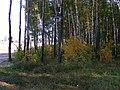 Kotelniki, Moscow Oblast, Russia - panoramio (4).jpg