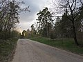 Krasnyy Khutir forest15.jpg